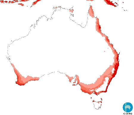 Climate suitability map for myrtle rust (CLIMEX Ecoclimatic Index). Darker red areas indicate higher climate suitability. With microscopic spores that float in the wind there is nothing to stop the spread of myrtle rust in eastern Australia, but its spread to Western Australia may be slowed by quarantine measures, helped by the fact that the prevailing winds typically blow from the west.