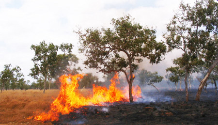 Certainty in carbon pricing could drive major changes in landscape management, such as the reduction in frequency and intensity of wildfires. This article indicates that future livelihoods in the Top End could be supported through effective carbon abatement and biodiversity stewardship.
