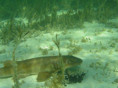 Shark Bay Australia Seagrass Will Shark Bay's Seagrass