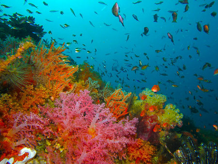 The living organisms that create coral reefs may be unable to relocate fast enough and far enough to survive ocean warming under climate change.
