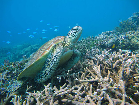 Marine animals will need to adjust the timing of breeding and migration under climate change.