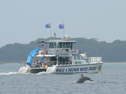 Dolphin-watching boat activity can alter key dolphin behaviour and must be carefully regulated.