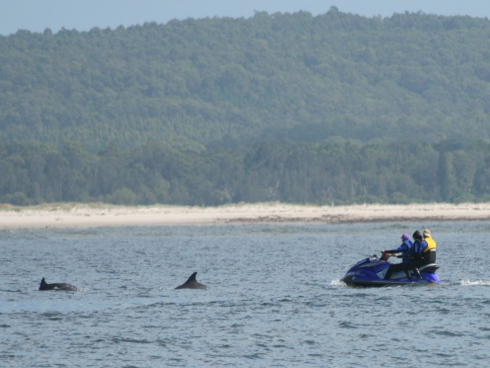Anyone in any kind of vessel, particularly a smaller more mobile vessel such as a jet-ski, needs to be aware that dolphins are highly sensitive to approach angles and distance.